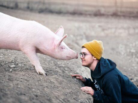 Tiere sind uns nicht Wurst!